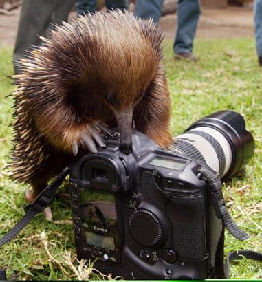 Digital Camera Turns People, Owner Into Animals